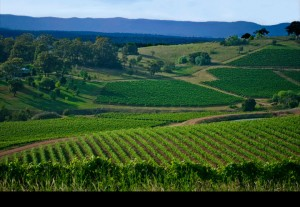 Hunter Valley view